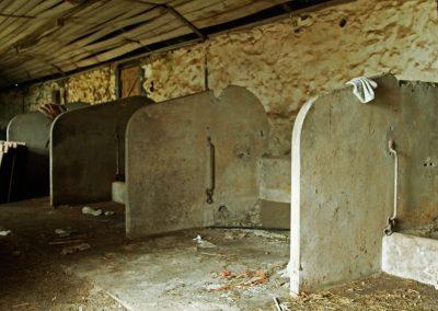 Milking Stalls